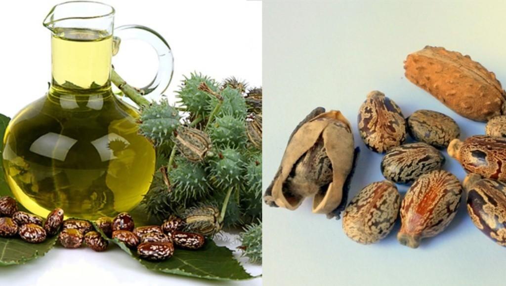 Características del aceite de castor