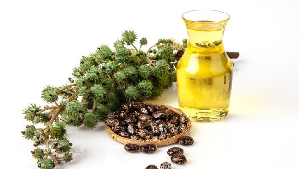 Beneficios y usos del aceite de castor