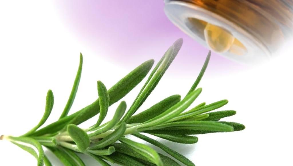 Usos y beneficios del Aceite de Estragón