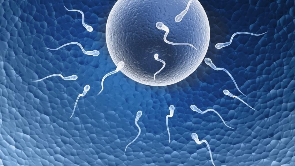 La fertilidad y el aceite de krill