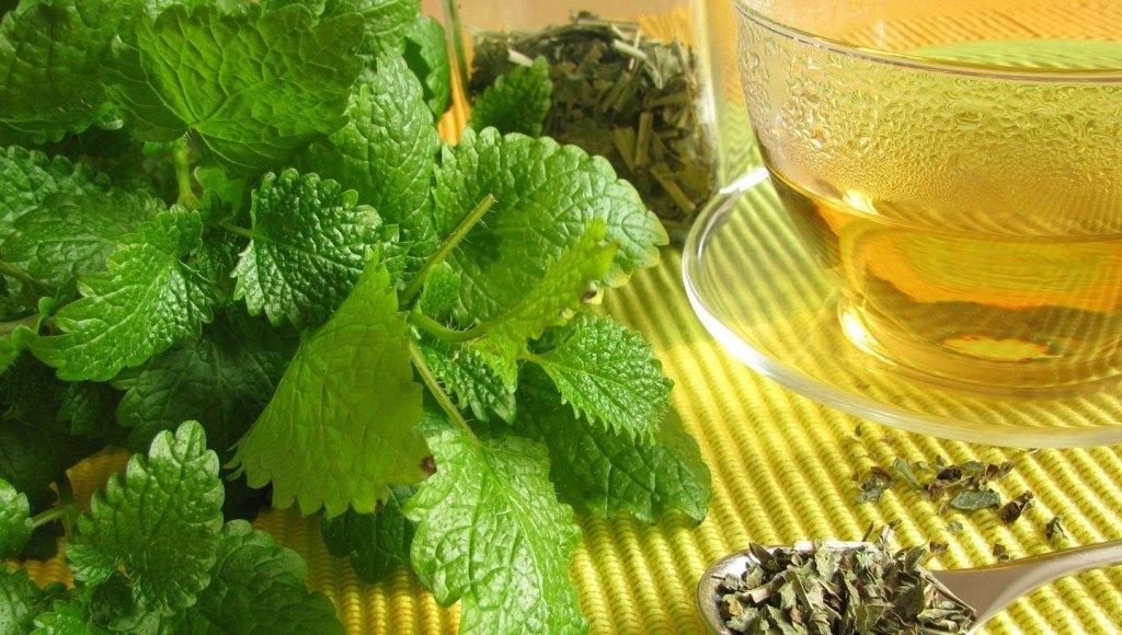 Usos medicinales de la melisa