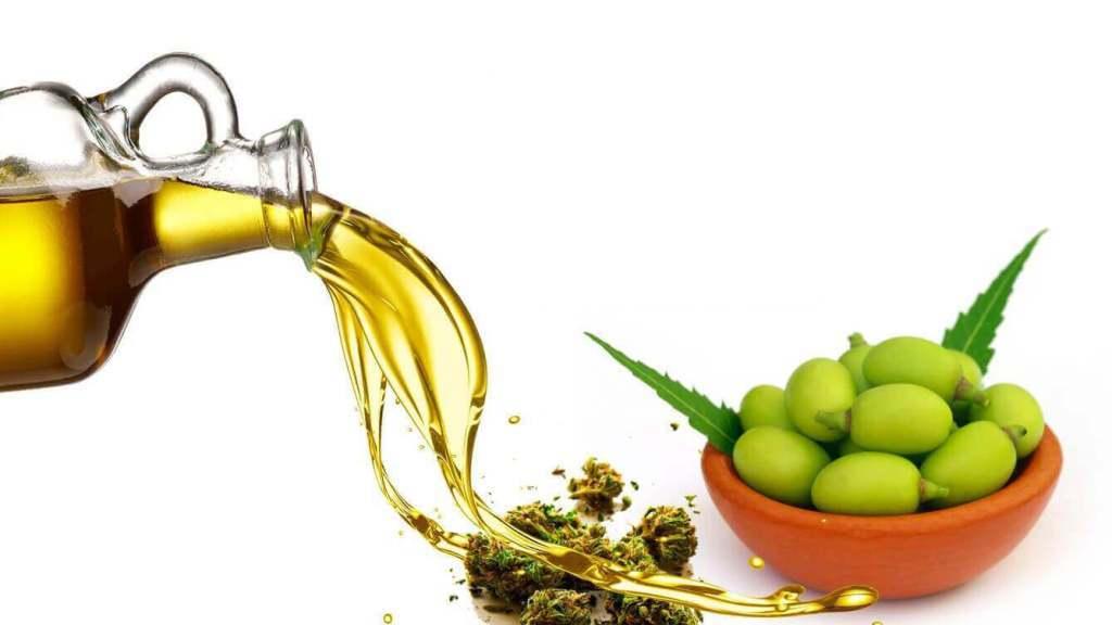 ¿Cómo se extrae el aceite de neem?