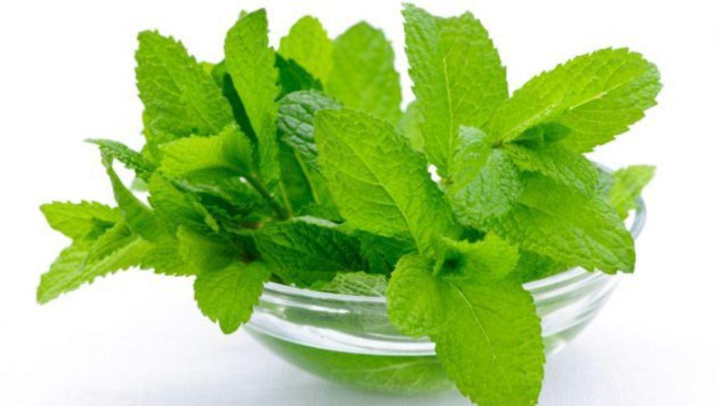 Usos gastronómicos del té de menta