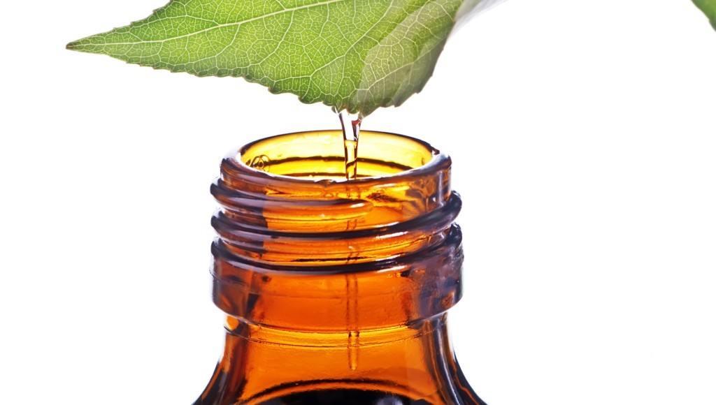 ¿Cómo se extrae el aceite de verbena?
