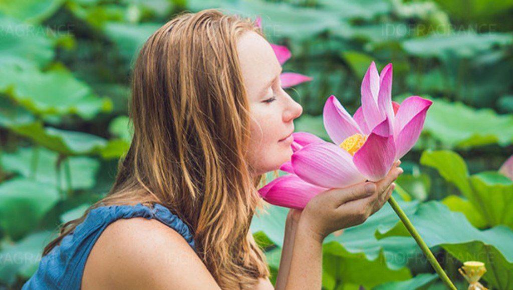 Aceite de flor de loto en la aromaterapia