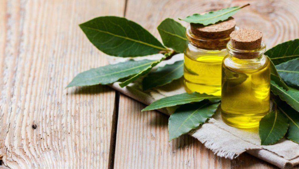 Características del aceite de laurel