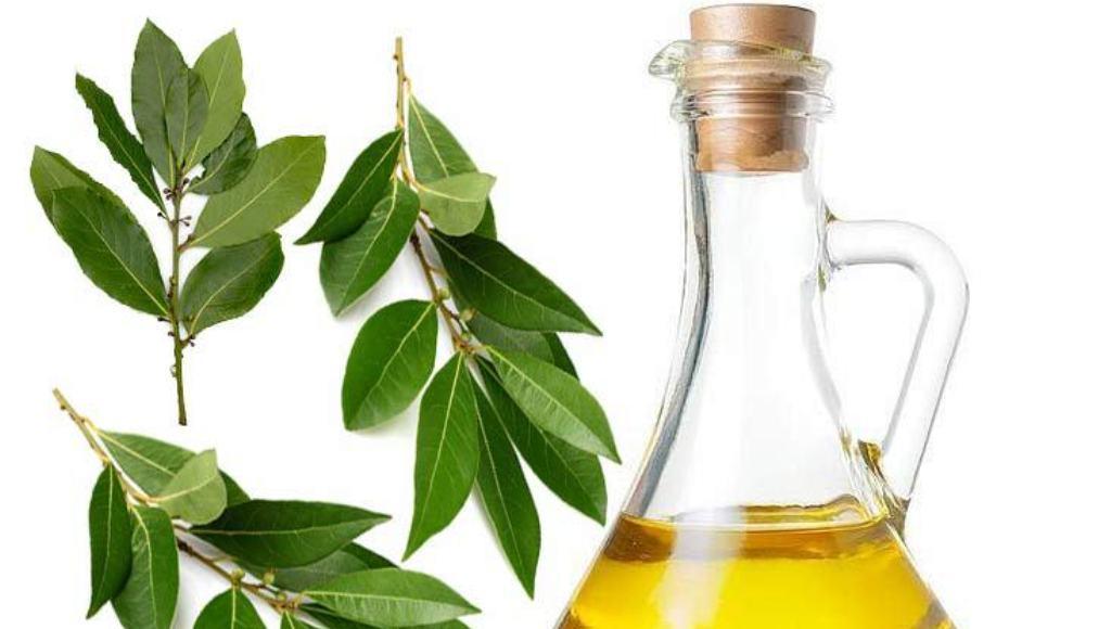 Usos y beneficios del aceite de laurel
