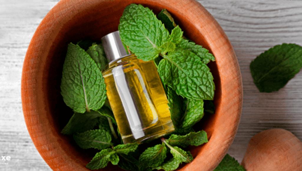 Usos y beneficios del aceite de Melisa