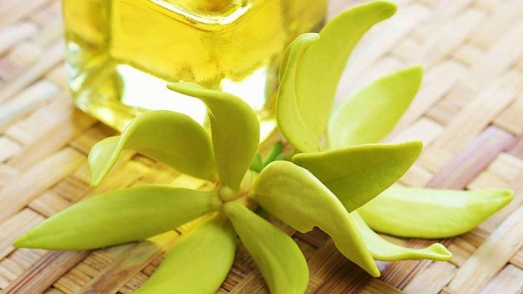 Usos y beneficios del aceite de ylang ylang