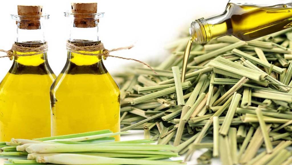 Características del aceite de citronela