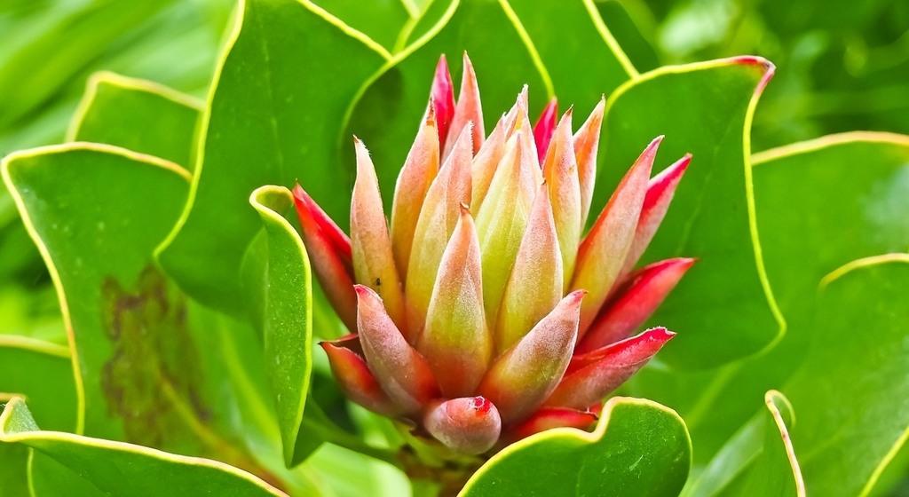 Curcuma 1 es una planta