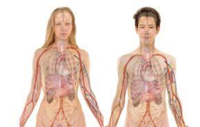 Hígado: Enfermedades, Bacterias, Desintoxicarlo, Limpiarlo, Donaciones y Funciones Principales