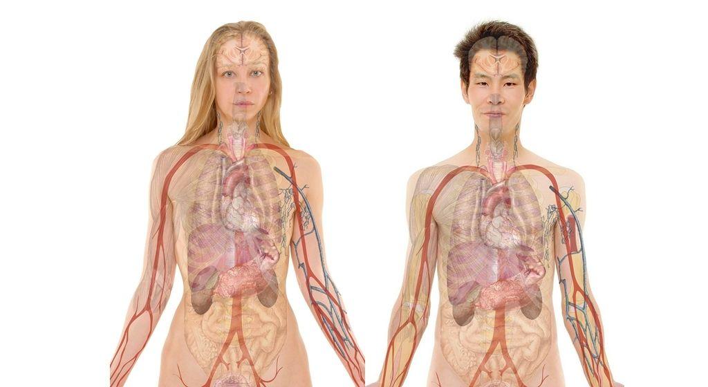 Hígado nuestro filtro interno