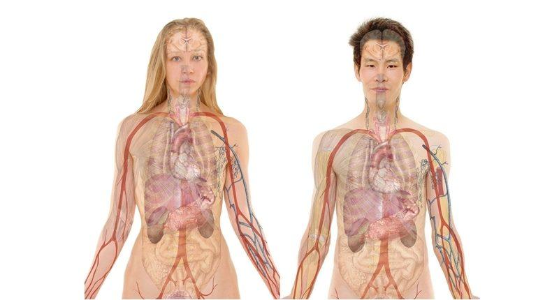 se afectan diversos organos