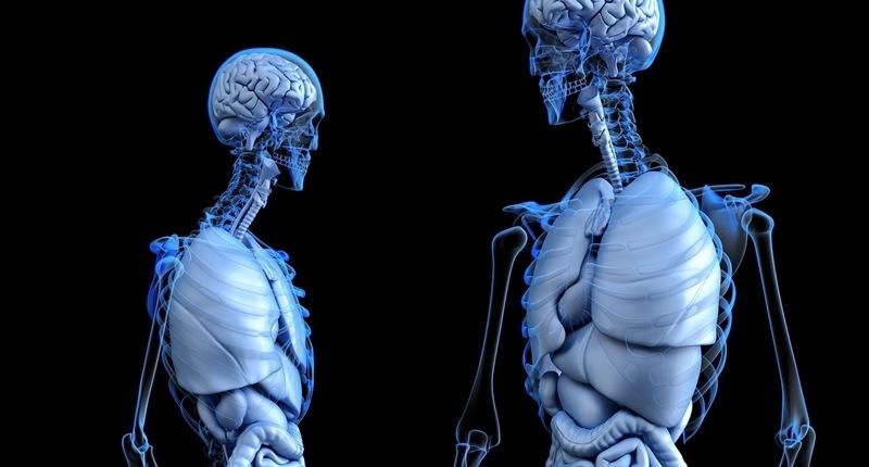 Todo lo que debes saber sobre el ritmo circadiano en el organismo