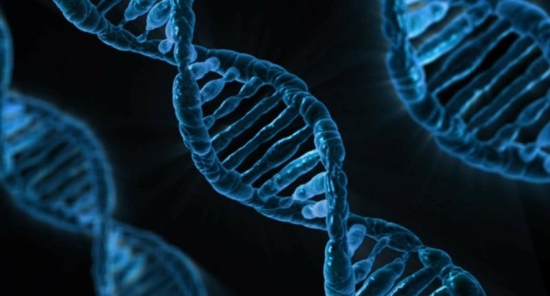 La nuez de Brasil ADN