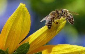 Todos los Tipos de Miel: Sus Contraindicaciones y Beneficios