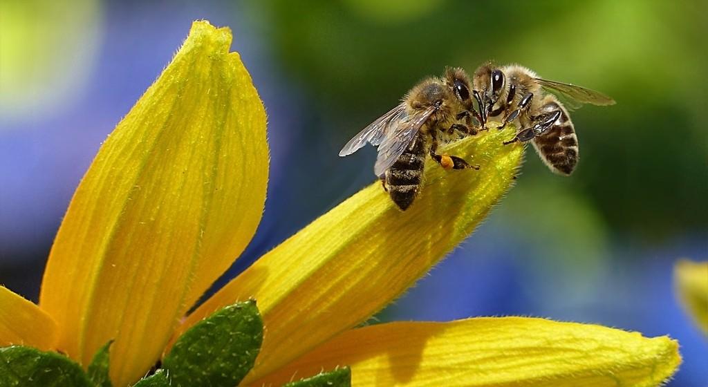 La miel proviene del néctar de las flores