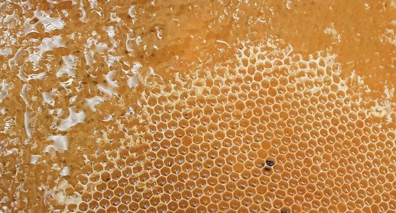 Propoleo 8 miel y eucalipto