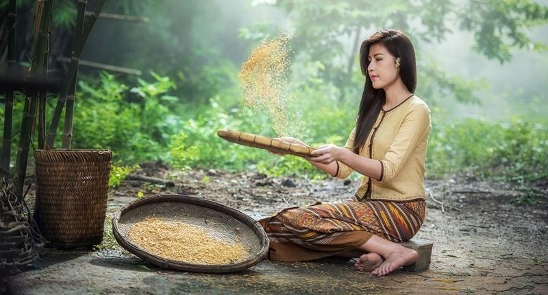Arroz milenario proviene de Asia
