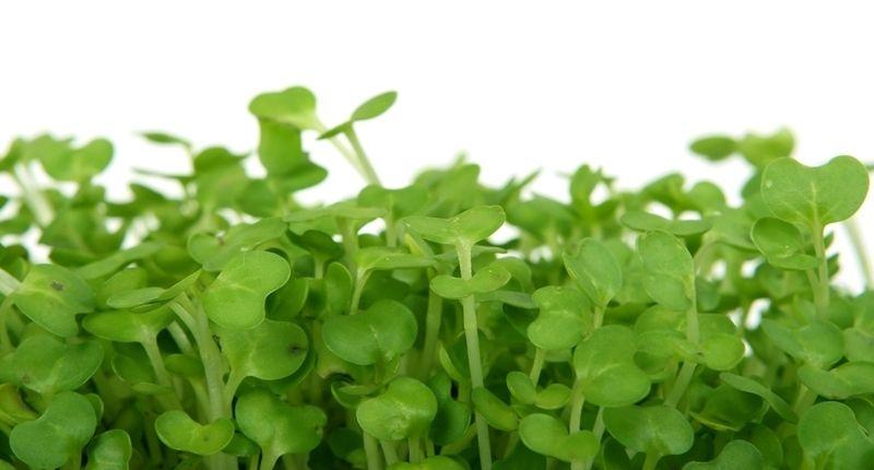 Consumir más que vegetales para estar alimentado