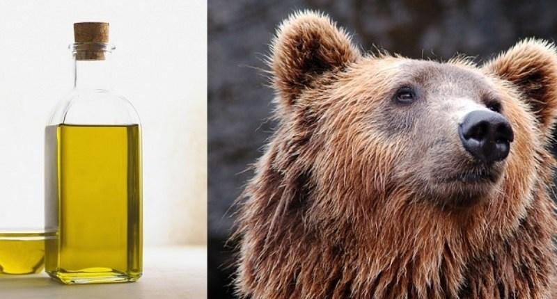 aceite de oso
