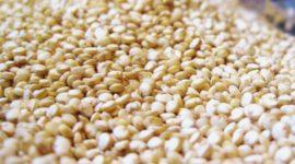 Quínoa cruda: Alergias, composición y recetas