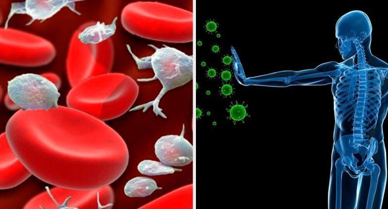 la raiz de bardana refuerza el sistema inmunologico
