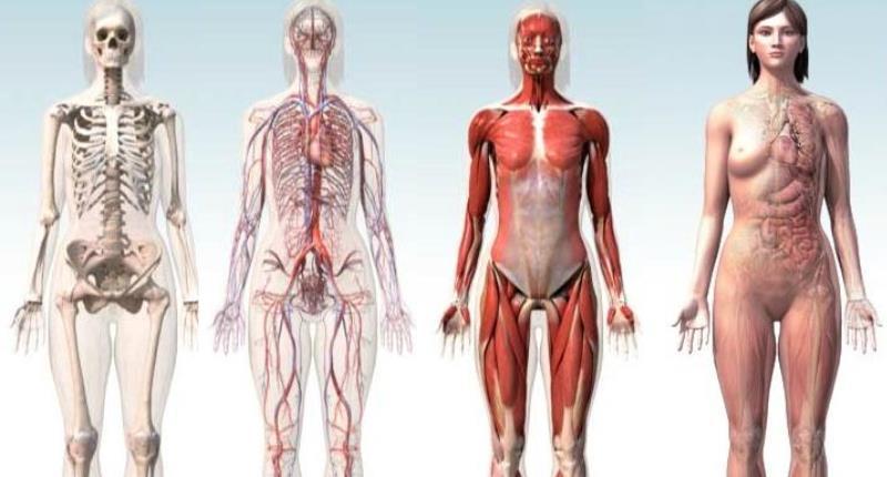 efectos adversos del roacutan