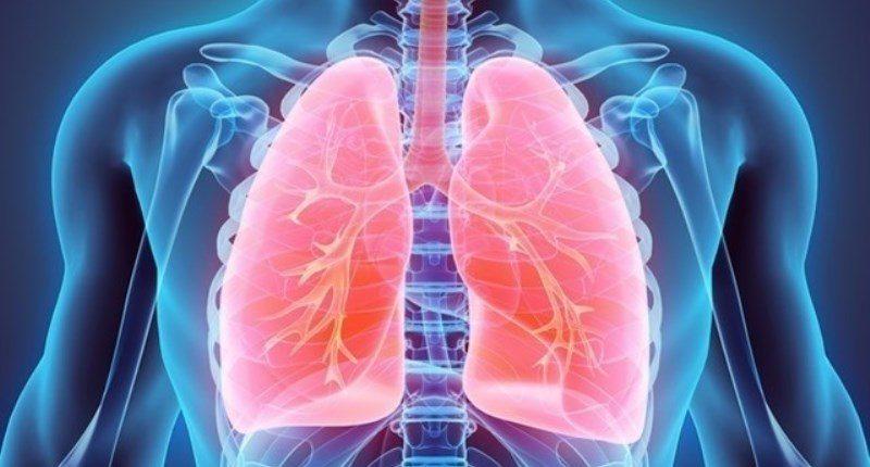 el romero por sus propiedades puede proteger organos como los pulmones