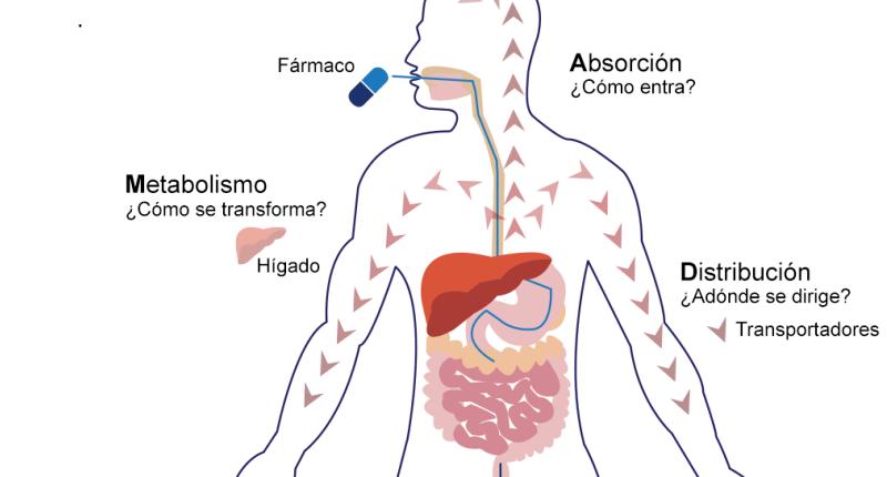 farmacocinetica de las tetraciclinas