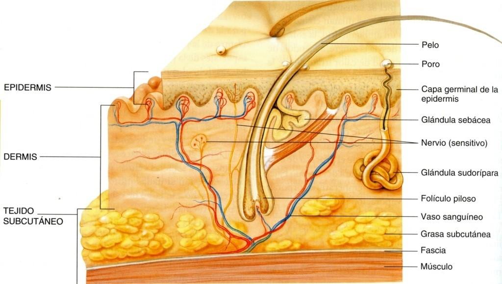 Principios activos de la piel acneica