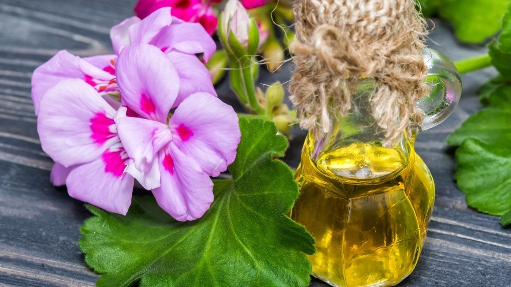 Que es el aceite de geranio