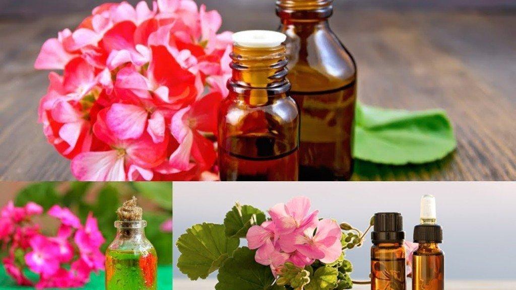 Como hacer aceite esencial de geranio