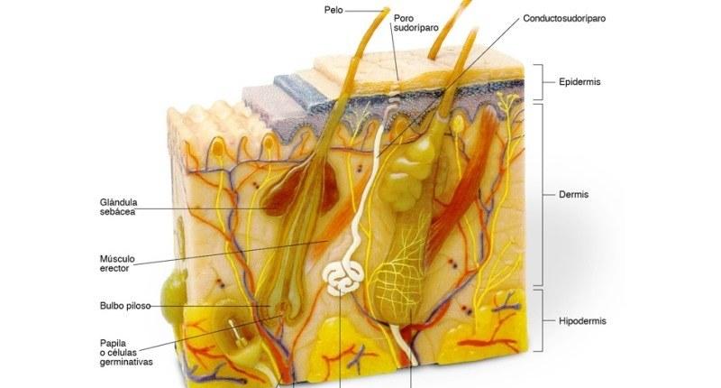 causas y sintomas del acne