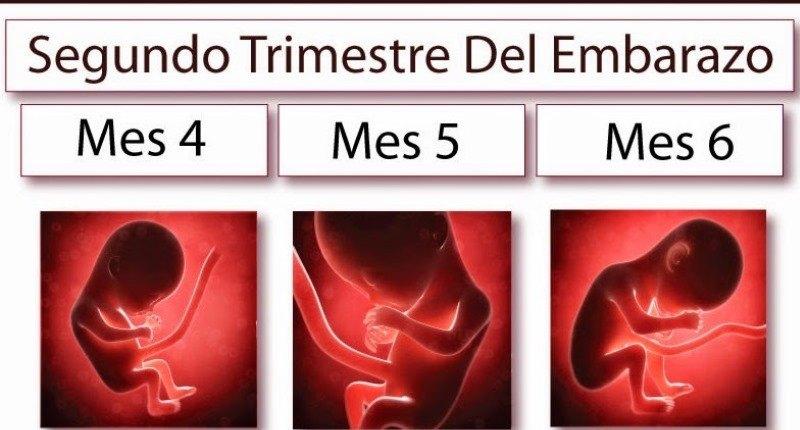 embarazo segundo trimestre