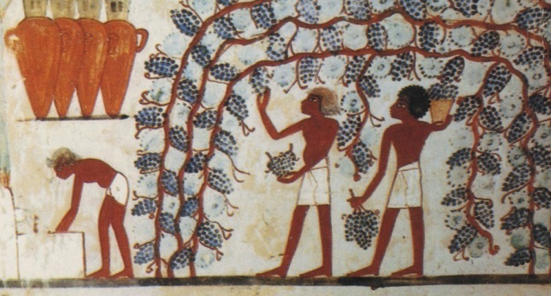 origen de las uvas
