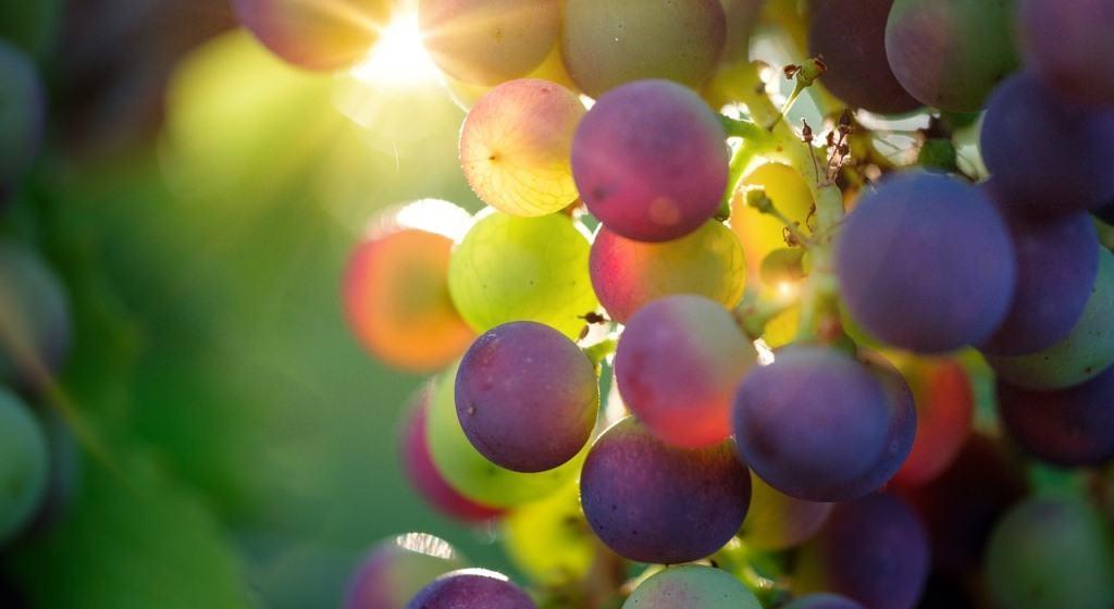 diabetes y uvas blancas beneficios para la salud