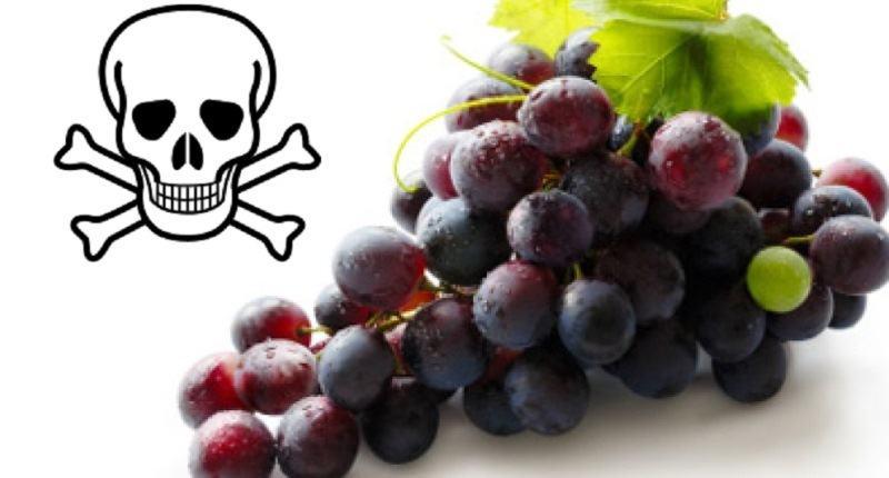 son toxicas las uvas