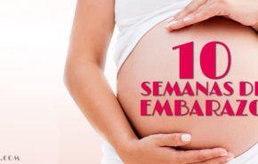 10 Semanas de Embarazo – Gestación Completa paso a paso