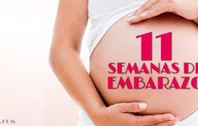 11 Semanas de Embarazo – Gestación Completa paso a paso