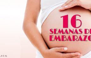 16 Semanas de Embarazo – Gestación Completa paso a paso