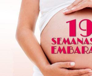 19 Semanas de Embarazo – Gestación Completa paso a paso