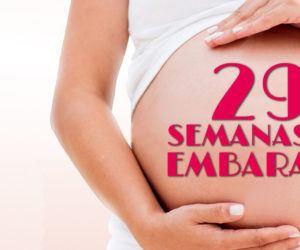 29 Semanas de Embarazo – Gestación Completa paso a paso
