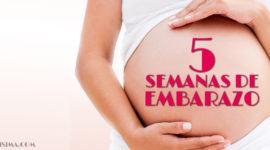 5 Semanas de Embarazo – Gestación Completa paso a paso