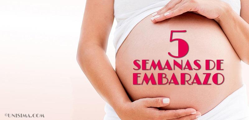 5 semanas de embarazo