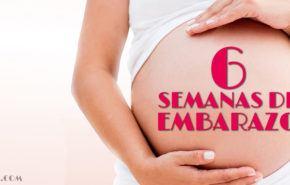 6 Semanas de Embarazo – Gestación Completa paso a paso
