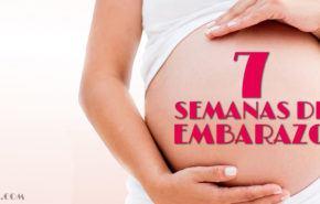 7 Semanas de Embarazo – Gestación Completa paso a paso