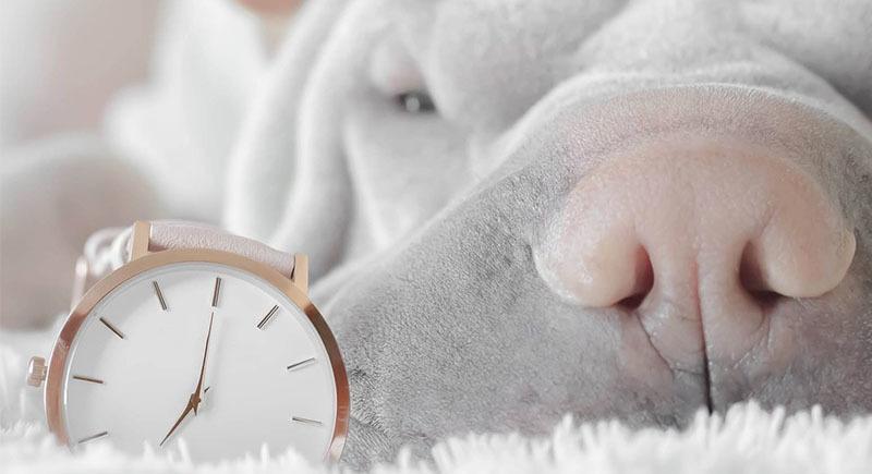 Consejo para dormir: mejor dormir sin horario