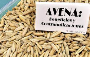 Avena: Efectos secundarios y Contraindicaciones, Beneficios y principales Usos